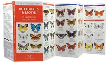 Pocket Naturalist: New England Butterflies & Moths