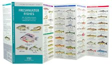 Pocket Naturalist: Freshwater Fishes