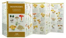 Pocket Naturalist: Mushrooms